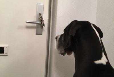 Brera wacht bij de deur - LITOPET