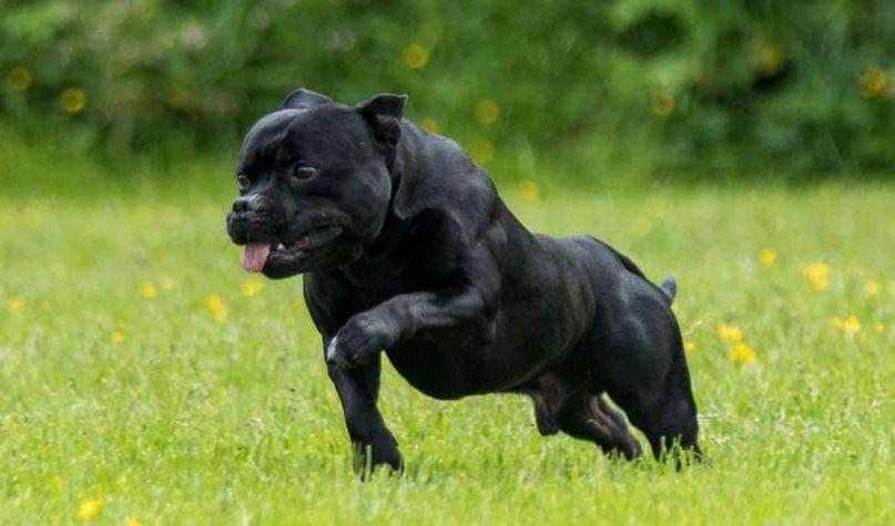 Gewrichtspijn bij je hond? LITOPET vermindert pijn, is ontstekingsremmend en 100% natuurlijk
