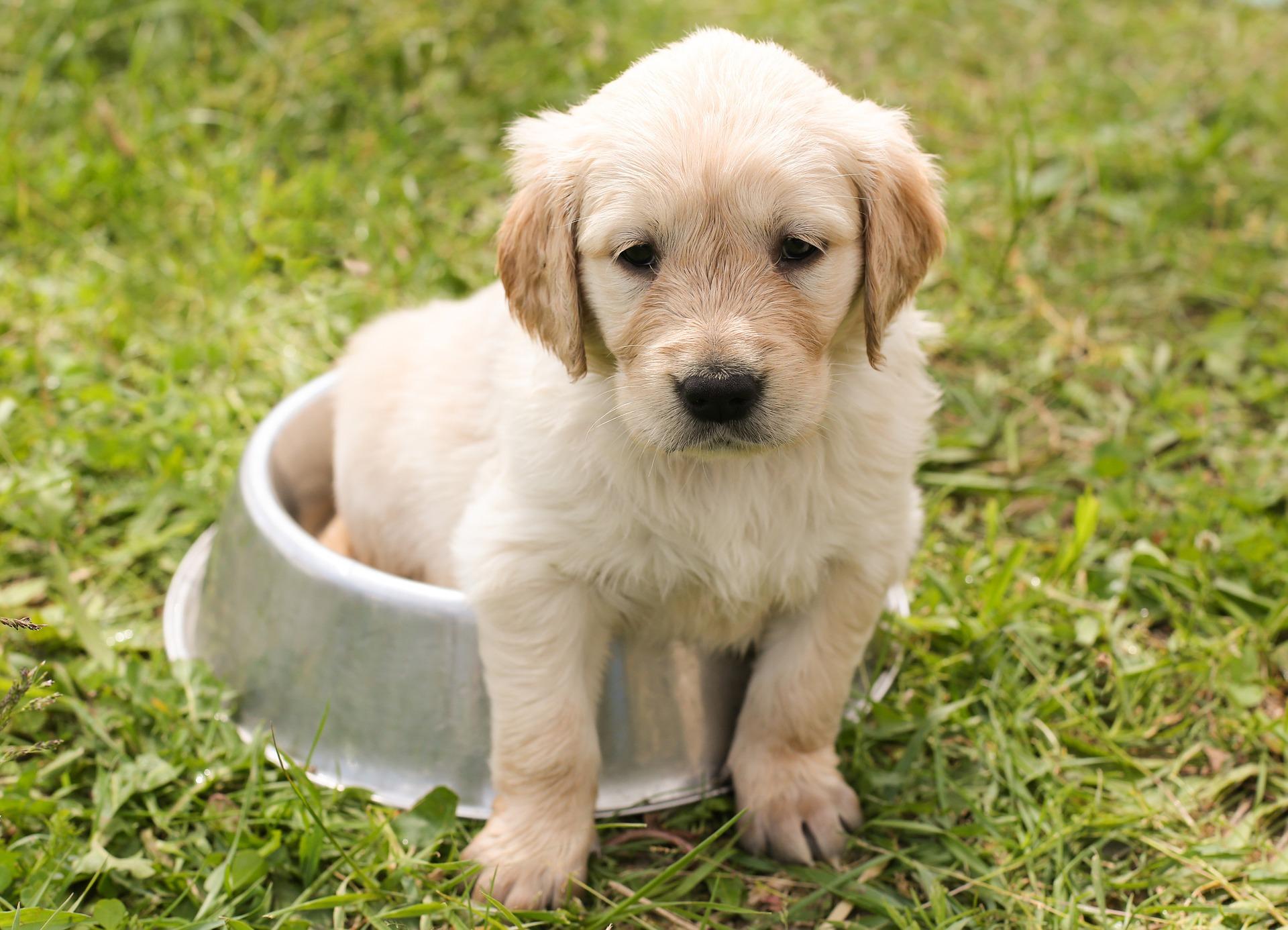 Zomertips voor je hond - LITOPET rozenbottelextract